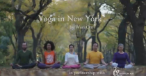 People do yoga in the forest in New York