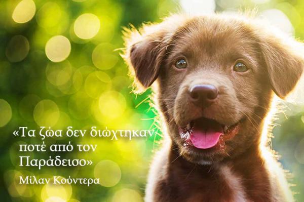 cute-dog-names2
